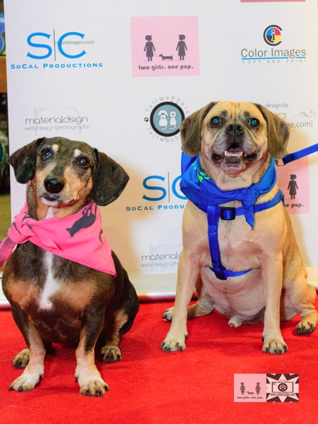 The four legged hosts of the evening, Comet and Harry Winston